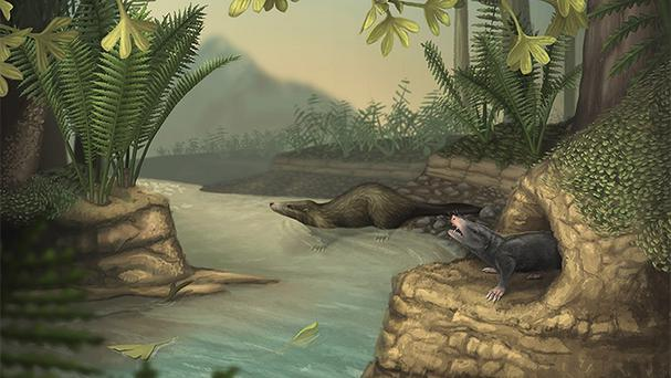 Artist's impression of early mammals as scientists have discovered that mammals went through an evolutionary explosion during the Jurassic period more than 145 million years ago (University of Oxford/PA)