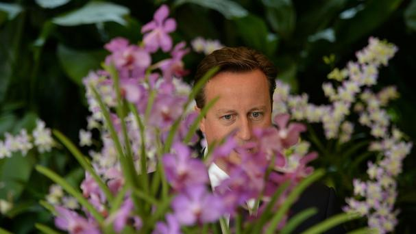 Prime Minister David Cameron looks at a Papilionanda David Cameron, an orchid that was named after him during his visit to the Singapore Botanical Gardens