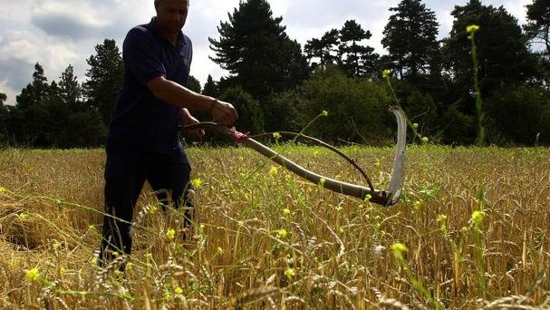 The Prince of Wales extolled the virtues of the ancient art of scything