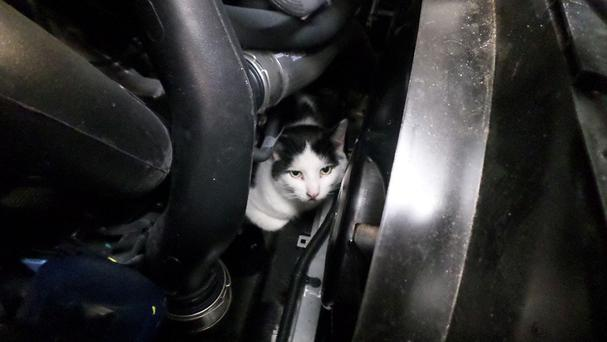 Darcy survived a 150-mile journey trapped in the engine compartment of a car (RSPCA/PA)