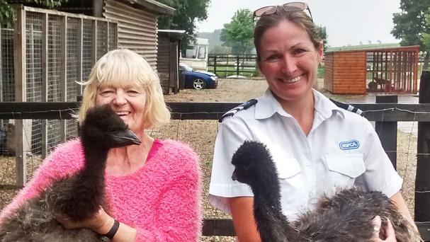 Anne-Marie Kirby, left, holds Mathilda and RSPCA animal welfare officer Jane Folly holds Monty the emu after the two lovebirds were reunited (RSPCA/PA)