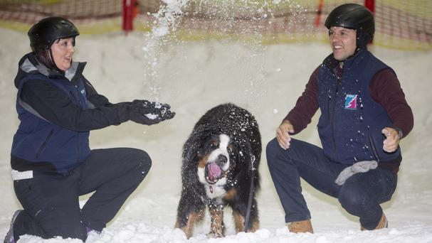 Angus enjoys frolicking at Snow Factor Braehead (PA/Jeff Holmes)