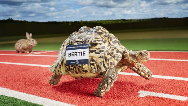 Bertie the tortoise, who features in the Guinness World Records 2016 edition for the fastest tortoise (Guinness World Records/PA)