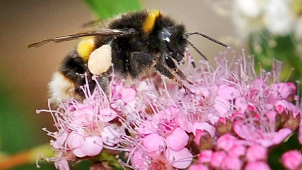 A student has discovered the most painful places to be stung by a bee