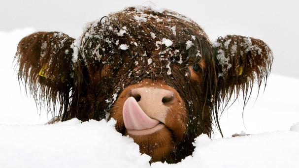 Academics cataloguing different Scots words for snow have logged 421 terms