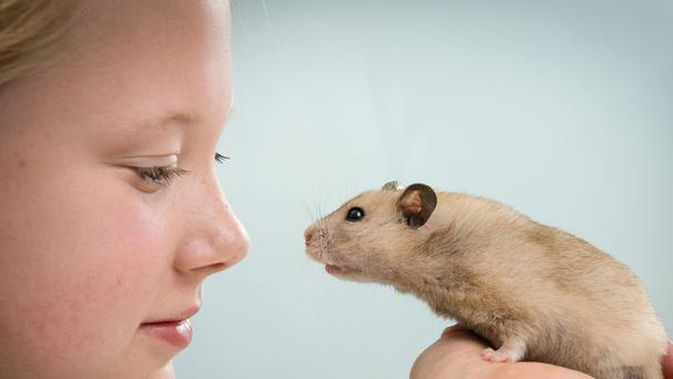 Codie Wilkinson, 13, with her pet hamster Beth
