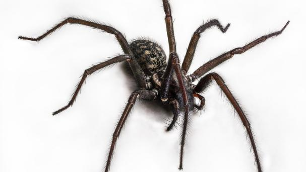 A man set fire to a petrol station after trying to burn what he said was a spider near his fuel cap