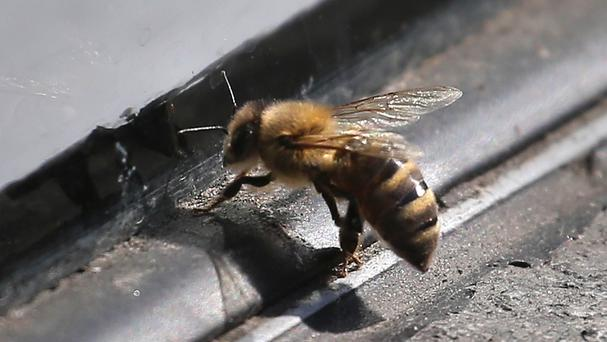 A truck carrying honeybees overturned in Oklahoma