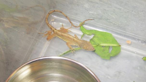 Lizard Flo Rida hitched a lift from the US state to Aberdeen