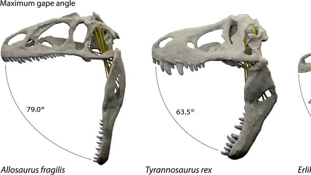 Hollywood depictions of Tyrannosaurus rex with terrifying gaping jaws full of teeth are probably right, according to researchers (University of Bristol/PA)
