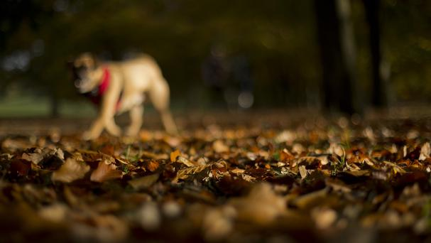 Stafford Borough Council has invested in a pair of night-vision goggles to catch dog owners who fail to clear up after their pets