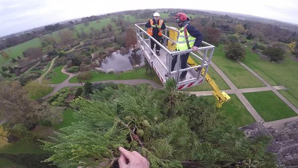 The view from the top of the giant redwood tree at Wakehurst, West Sussex, which is the UK's tallest living Christmas tree