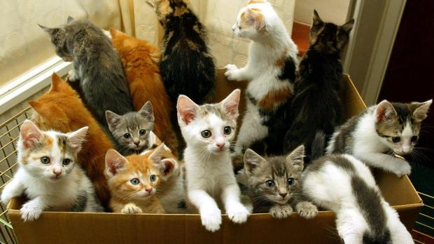 People flooded Twitter with cat pictures during the Brussels raids social media news blackout