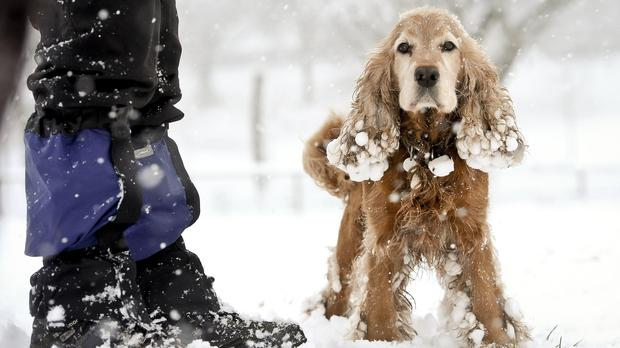 And early Christmas is all-white for some pets in Manchester
