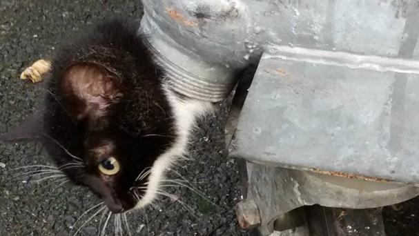Dusty the kitten had to be rescued after getting her head stuck in the drainage duct of a bin (West Midlands Fire Twitter feed/PA)