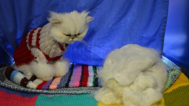 Penelope the Persian cat was given a haircut by Battersea staff (Battersea Dogs and Cats Home/PA)
