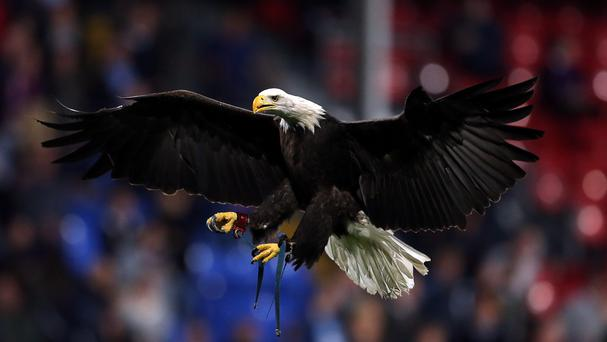 Eagles could be used by police to take down rogue drones, which they would consider prey