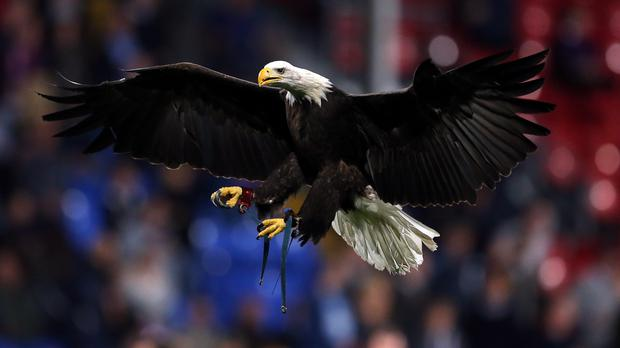 Police may turn to the flying squad and use eagles to bring down drones operated by criminal gangs