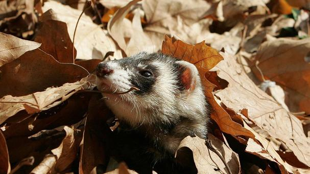 Pets including ferrets have been left behind in properties by tenants after they have left, a study has shown