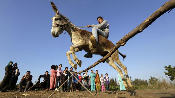 Ahmed Ayman jumps his trained donkey (AP)