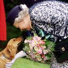 The Queen meeting a corgi when she visited the Roman site of Vindolanda near Hadrian's Wall in Northumberland