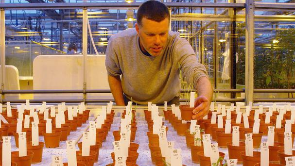 Researchers at Wageningen University in Holland have harvested tomatoes, peas, rye, rocket, radish and garden cress raised on simulated Martian soil (Wieger Wamelink/PA Wire)
