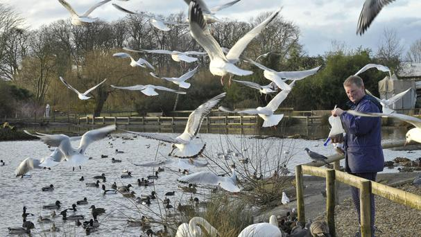 Bread should be avoided when feeding ducks, experts say