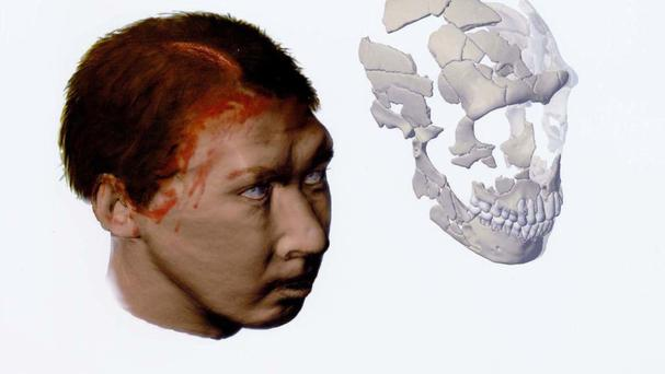 Neanderthals did not exclusively eat meat, with nuts and berries widely consumed