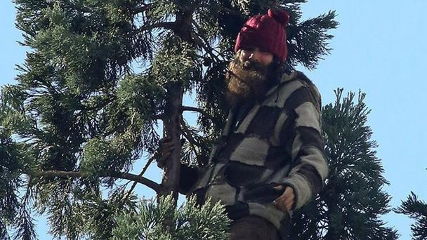Police said the issue 'appears to be between the man and the tree' (Greg Gilbert/The Seattle Times via AP)