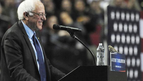 Bernie watches the birdie in a hilarious moment at his Oregon rally (AP)