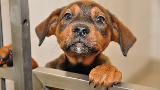 Pet insurers dealt with 686,000 claims for dogs