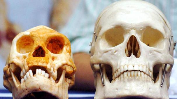 According to the new research all the skeletal remains of hobbits (left) found to date are between 100,000 and 60,000 years old