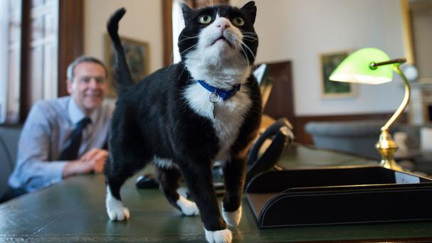 Chief mouser Palmerston