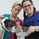 Ray the boxer, with his owner Jasmine Quick (right) and PDSA vet Erin Beale, who wolfed down the entire contents of a baking cupboard (PDSA/PA)
