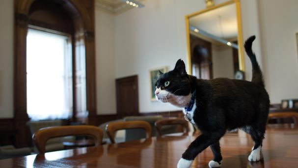 Palmerston is the chief mouser at the Foreign Office