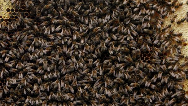 Tom Moses spotted more than 10,000 bees on a car in Haverfordwest
