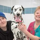 Kerry Buck with PDSA head nurse Steph Williams and Molly (Gilbert Johnston/PDSA/PA)