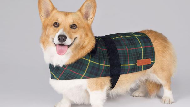 A pet coat, priced from £35, is among a new exclusive range of pet accessories launched by the Royal Collection Trust