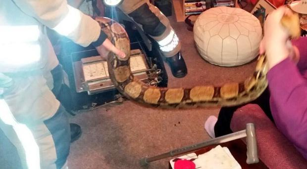 The snake being removed from the heater (Gainsborough Fire Station/PA)