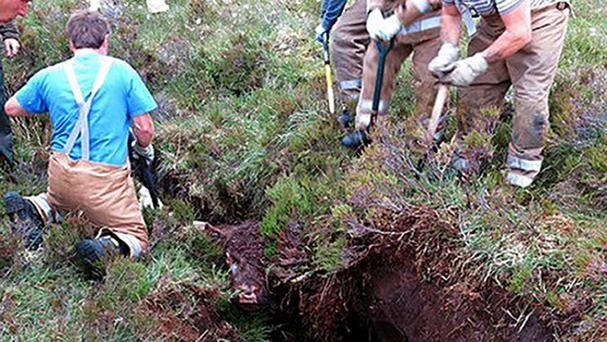 The bull was trapped in a ditch on the Isle of Skye (Scottish Fire and Rescue Service/PA)