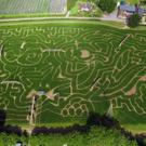 An aerial view of a Maize Maze inspired by the new animated movie Finding Dory (Tulleys Maze)