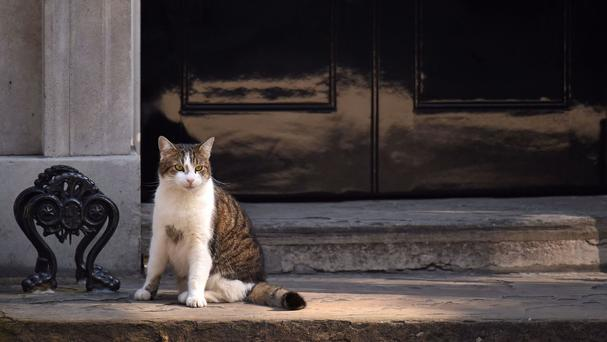 The PM's chief mouser was expected to make a full recovery
