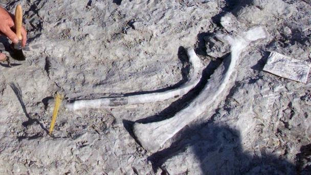 A dinosaur has been diagnosed with severe arthritis 70 million years after its death