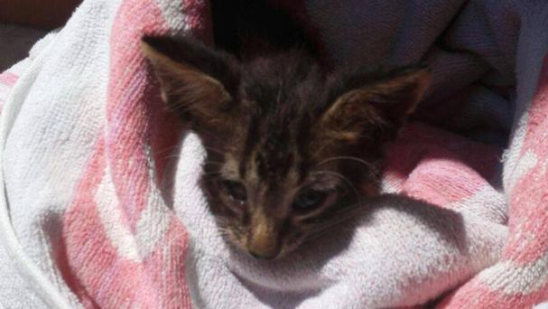 A member of the Italian coast guard rescued and revived a drowning kitten at a Sicilian port (AP)