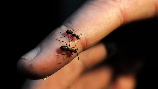 Reports of ants increased by 73%, says Rentokil