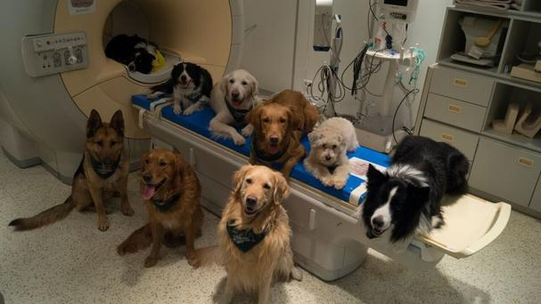 Some of the dogs involved in the study sit around a scanner in Budapest (MR Research Centre/AP)