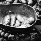 Defra publishes the oldest versions of the National Food Survey spanning back to the 1940s