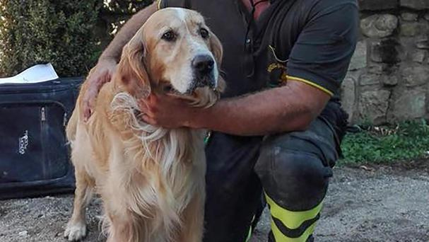 A firefighter pets Romeo, the golden retriever that was rescued from a pile of quake rubble (AP)