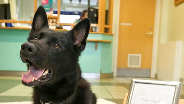 A police dog named JJ who has been presented with a PDSA Commendation for tracking down a robber who had stolen an iPhone from a 15-year-old girl at knifepoint