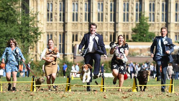 MPs take part in the Westminster Dog of the Year Competition 2016, organised jointly by the Kennel Club and the Dogs Trust at Victoria Tower Gardens in Westminster, London.